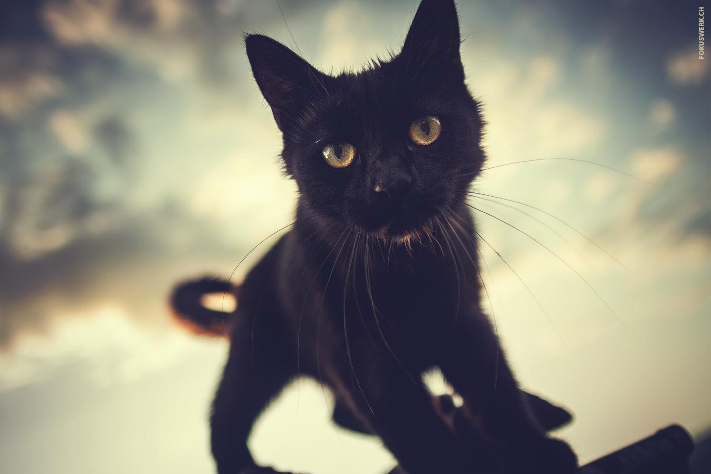 Black cat contre-jour