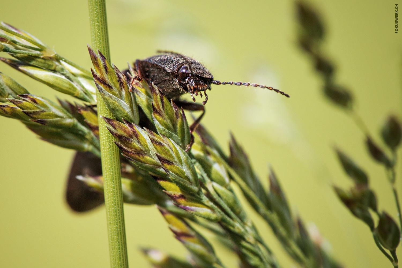 Käfer auf Pflanze