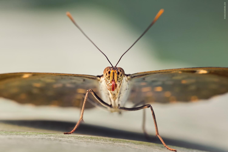 Schmetterling mit Wassertropf