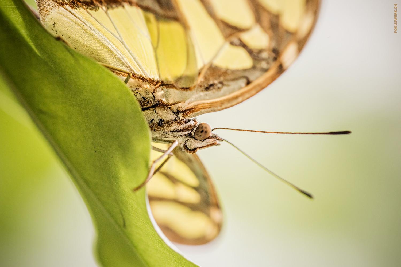 Schmetterling von unten